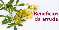 Os benefícios do chá de arruda: uma bebida que previne, trata e cura diversas doenças! | Cura pela Natureza