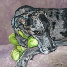 """Duke,"" Merle Great Dane pet portrait oil painting on 12"" x 12"" gallery wrap edge canvas. Merle Great Danes, Oil Painting Gallery, Great Dane Dogs, Animal Drawings, Drawing Animals, Animal Antics, Dog Paintings, Italian Greyhound, Dog Portraits"