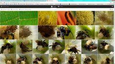 Photoshop Elements: Képek megosztása | Mercator Stúdió