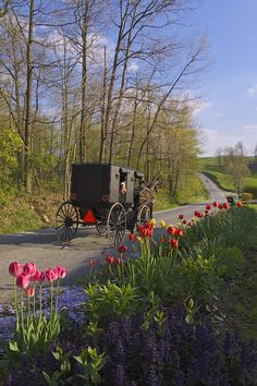 Springtime buggy ride. Hello to the little one watching from the buggy. CLICK HERE for more about Ohio's Amish Country at www.OACountry.com! #Amish #Ohio #Tourism (Doyle Yoder photo)