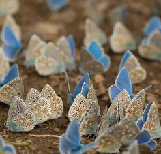 many Butterflies on dirt ground