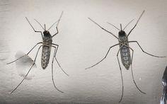 EEUU afirma que el diagnóstico del Zika es más efectivo en exámenes de orina
