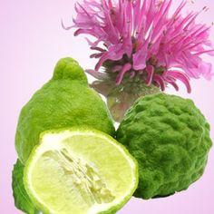 Gingered Bergamot fragrance oil by Natures Garden scents is a scent that smells like fresh ginger and citrus. You will love our wholesale fragrances. Diy Perfume Recipes, Wholesale Fragrance Oils, Aroma Beads, Bath Gel, Candle Making Supplies, Candlemaking, Bath And Body, Garden, Fragrances