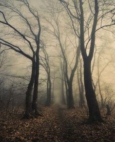 so pretty fog