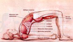 Postura da ponte ou Setu-Bandhasansa Esta flexão abre e fortalece o peito, os quadris e os quadrícipes. Equilibra o sistema nervoso e revigora o corpo todo. EFEITOS ° Tem poderoso efeito na tonific…