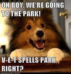 V-E-T spells PARK, right?