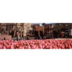 Tulips in a garden with Old South Church in the background Copley Square Boston Suffolk County Massachusetts USA Canvas Art - Panoramic Images (18 x 7)