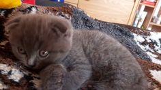 cute kitty , cat bath time :D