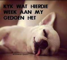 Afrikaanse Quotes, Laugh At Yourself, French Bulldog, Laughter, Humor, South Africa, African, Night, Do Your Thing
