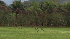 Famiglia Libardoni: Encontro Xerém, RJ, Brasil. Pombos 05. IMG_8617. 640...