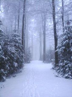 Winterwald :-) Winter, Snow, Outdoor, Room Interior Design, Woodland Forest, Dekoration, Winter Time, Outdoors, Outdoor Games