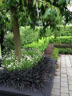 Flowering cherry & layered hedges | Thorndon city garden, HEDGE Garden Design & Nursery. Photo courtesy of Paul McCredie for NZ House & Garden.