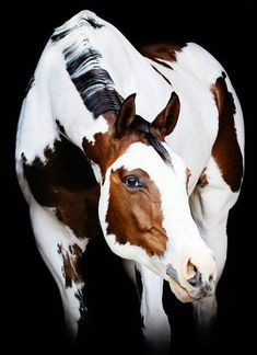 equus equine ◕ le cheval the horse pferde caballo Most Beautiful Horses, All The Pretty Horses, Beautiful Creatures, Animals Beautiful, Cute Animals, Animals Dog, Cute Horses, Horse Love, Horse Photos