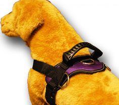 Purple Nylon Dog Harness Multipurpose Service Pulling Sport Professional Training Walking Pit Bull Lab for all breeds all sizes variety of colors. http://www.amazon.com/Harness-Multipurpose-Service-Professional-Training/dp/B00FAD424C%3Fpsc%3D1%26SubscriptionId%3DAKIAIVRYJSO43DEAIMVA%26tag%3Ddogsicom-20%26linkCode%3Dxm2%26camp%3D2025%26creative%3D165953%26creativeASIN%3DB00FAD424C DogSiteWorldStore - http://DogSiteWorld.com/