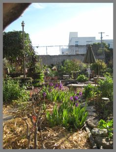 Community garden  www.dreambigcollection.com