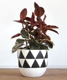 Pop & Scott Black Triangle Pot- Buy Pop and Scott online Australia