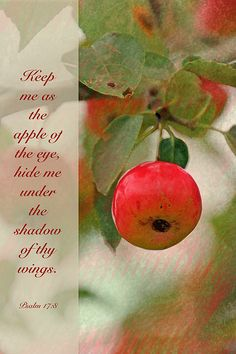 Psalm 17:8 Keep me as the apple of your eye. Hide me under the shadow of your wings..