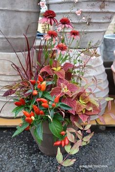 Container Gardening, Kitchen, Plants, Cuisine, Kitchens, Flora, Container Garden, Plant, Stove