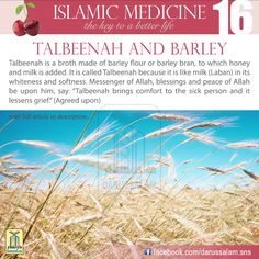"Al-Muwaffaq Al-Baghdadi said, ""If you want to know the benefits of Talbeenah, then think of the benefits of barley water, especially if it is made of bran. There is nothing more beneficial than broth for one who eats a lot of barley. As for the one who eats a lot of wheat, the best thing for him when he is sick is barley broth."""