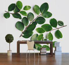 Nature inspired Photographic Wallpaper. Email nataschavniekerk@gmail.com
