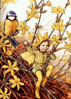 Fairy: by (CMB) Cicely Mary Barker Cicely Mary Barker, Winter Jasmine, Josephine Wall, Kobold, Vintage Fairies, Fairy Pictures, Beautiful Fairies, Flower Fairies, Fairies Garden