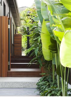 If you are working with the best backyard pool landscaping ideas there are lot of choices. You need to look into your budget for backyard landscaping ideas Tropical Garden Design, Tropical Landscaping, Small Tropical Gardens, Coastal Gardens, Modern Tropical, Tropical Vibes, Tropical Decor, Tropical Plants, Landscaping Ideas