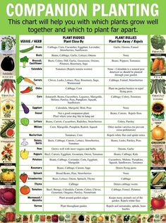Companion Planting Chart Lots Of Great Info Video Tutorial Source by Our Reader Score[Total: 0 Average: Related photos:How to Build Raised Garden Beds - Some gardeners prefer traditional gardening, .Build a Raised Garden Vegetable Bed Companion Planting Chart, Companion Gardening, Vegetable Companion Planting, Planting Vegetables, Veggies, Container Gardening Vegetables, Planting Potatoes, Potatoes Growing, Regrow Vegetables