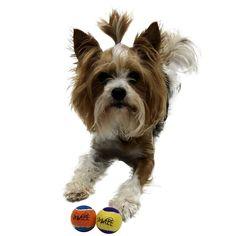 b19f1691cdb3 Amazon.com : Squeaky Mini Tennis Ball for Dogs 1.5