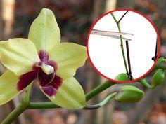 pielęgnacja storczyków po przekwitnięciu Orchid Care, Interior Plants, Home And Garden, Herbs, Backyard, House Design, Flowers, Home Decor, Gardening