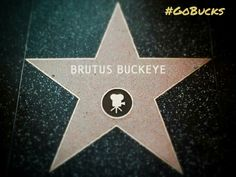 Way to go Brutus!