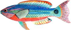 Exquisite Wrasse Tropical Fish Wall Art - buy at Blue Barnacles, www.bluebarnacles.com