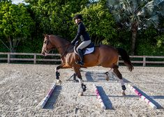 Improve Rideability for Confident Courses Prepare your horse for the show ring by refining his adjustability with this step-by-step gymnastic exercise program.