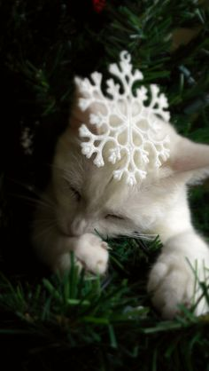 Kitten Taking a Nap in the Tree ♥