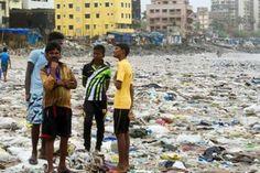 Cientistas documentam entrada de plástico na cadeia alimentar terrestre