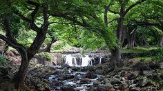 Foster Botanical Garden - Hawaii