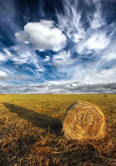 hayfields and blue skies.