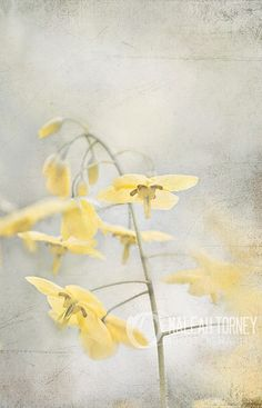 Delicate yellow flowers in the morning light