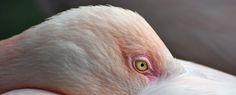 Zoo de Bâle©VB Le Zoo, Parrot, Parrot Bird, Parrots