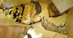猫さんがポトポト落ちすぎ!? ある暑い日に、階段がどえらいことになってた (ㆁωㆁ*)! 2枚|ペットフィルム -犬・猫・ペットの画像・動画まとめ…