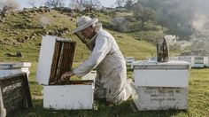 More than 40% of U.S. honeybee colonies died in past 12 months: USDA - MarketWatch