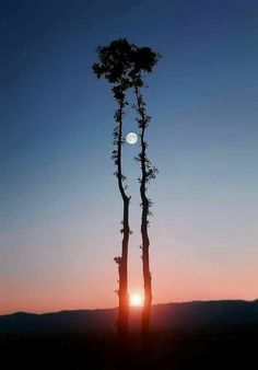 A German photographer spent 65 days with 16 cameras to get this shot, won't get the sun and moon together again until 2035.  properties-costa-brava.com