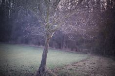 https://flic.kr/p/SPPC9Z | Tree | Tree