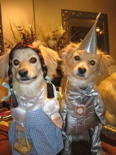 tin man costume for dog