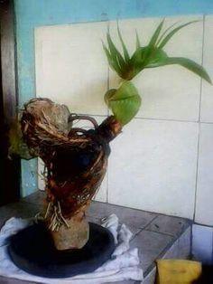 Bonsai Art, Bonsai Plants, Farming, Coconut