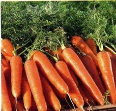 Cеем морковь с кофе - Садоводка