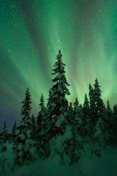 Aurora borealis pictured over a pine forest near Kiruna, Sweden