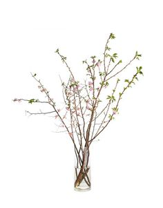 """I love the tallness and grace of quince. It's a statement — like having a miniature tree in your house. There are six branches here. The tallest is about five feet,"" explains Rufino. If you're using a clear cylinder, make sure the stems are perfectly manicured and that you change the water daily.   - HouseBeautiful.com"