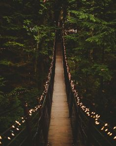 autumn, bridge, and cozy image