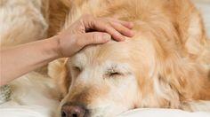 Tappavan vaarallinen bakteeri leviää koirilla – tarkkaile näitä oireita! http://www.mtv.fi/lifestyle/koti/artikkeli/tappavan-vaarallinen-bakteeri-leviaa-koirilla-tarkkaile-naita-oireita/5706940