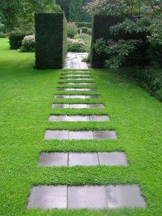 Herniaria glabra Green Carpet or Rupturewort